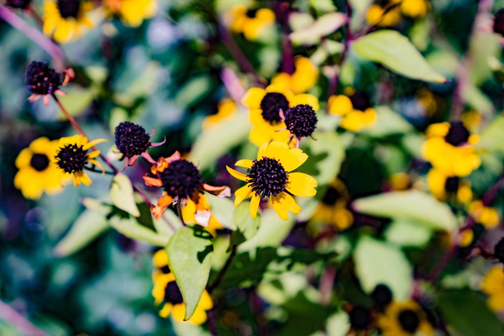 キク科の筒状花
