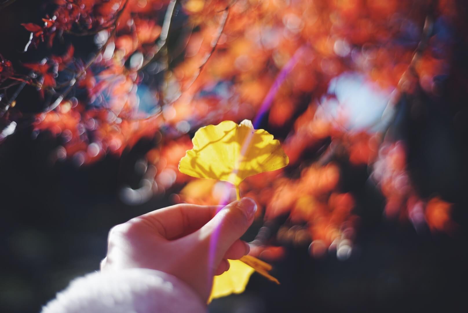 生活に季節感を取り込む。ちょっとだけ人生が豊かになる。